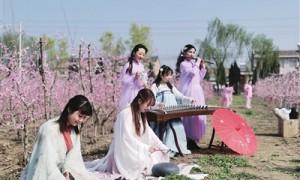 凤翔千亩桃花开 吸引了众多游客拍照留念