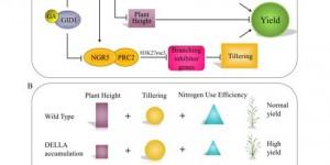 陕科大食品学院生物工程系薛惠丹副教授在cell子刊发表高水平论文
