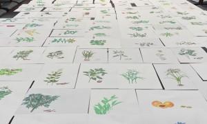 陕西能源职业技术学院医学院教师李蕊自创诗歌手绘500余味中草药
